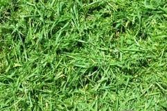 Snijd vers grasachtergrond Royalty-vrije Stock Foto