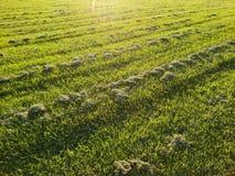 Snijd vers grasgebied stock foto's