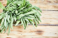 Snijd vers groene wijze bladeren in een draadmand royalty-vrije stock foto