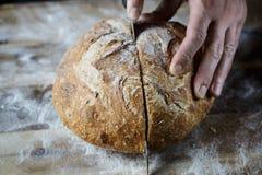 Snijdend vers eigengemaakt die brood van zuurdesem wordt gemaakt Artisanaal brood met gouden knapperige korst stock foto's