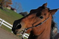 Snip the horse. Horse portrait during a ride around the rink Royalty Free Stock Photo