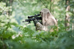 Sniper in forest Stock Image