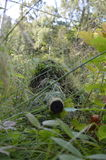 Sniper in the forest as silent warrior. Sniper in the forest near the tree, silence, invisible Stock Image