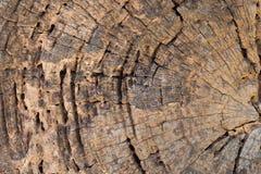 Snitt av den gamla trästrukturmodellen Royaltyfri Foto