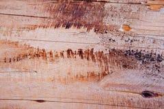 Snitt av en trädstruktur Arkivbild
