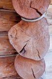 Snitt av en trädstruktur Royaltyfri Bild