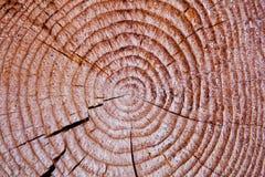 Snitt av en trädstruktur Arkivfoton