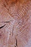 Snitt av en trädstruktur Royaltyfri Foto