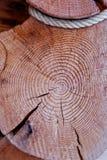 Snitt av en trädstruktur Arkivbilder