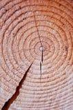 Snitt av en trädstruktur Royaltyfria Bilder