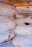 Snitt av en trädstruktur Royaltyfria Foton