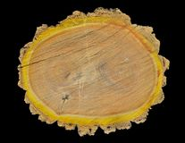Snitt av korkträd 11 Arkivfoto
