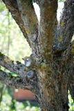 Snitt-avträdfilialen ettträd Trädgård och kökträdgård arkivbild