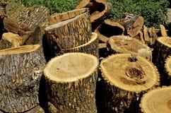 Snitt för askaträd in i avsnitt för det framtida vedträt arkivfoton