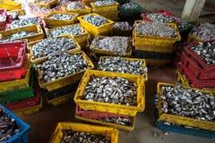 Snitt för huvud för Yellowstripe scadfisk och hållet i en hink för att göra gödsel eller nötkreatur mat i den Mekong deltan, söde royaltyfri foto