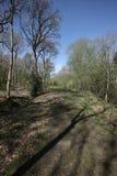 Snitterfield灌木 库存图片