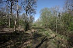 Snitterfield Arbustos Fotografia de Stock