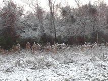 Snows in galveston. Sniw rare texas beautiful Royalty Free Stock Photos
