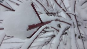 Snön är tecknet av vintern Arkivfoto
