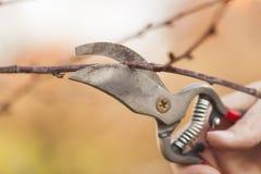 Snoeiend fruitboom - het Snijden Takken bij de lente stock fotografie