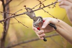 Snoeiend fruitboom - het Snijden Takken bij de lente stock afbeeldingen