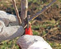 Snoeiende appelboom royalty-vrije stock foto