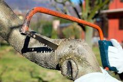 Snoeiende boom Stock Afbeeldingen