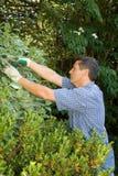 Snoeiende tuinman stock foto