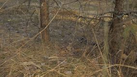 Snok i det l?st Ormen klibbade ut dess tunga i det torra gräset 4K lager videofilmer