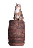Snoopy cat on barrel Royalty Free Stock Photography