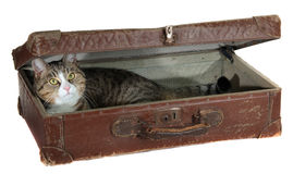 Snoopy pet in antiquarian case Stock Image