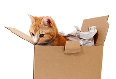 Snoopy tomcat in cardboard Royalty Free Stock Images