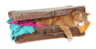 Snoopy tomcat in old suitcase with clothes Royalty Free Stock Photos