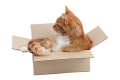 Snoopy tomcat in removal box Stock Photo