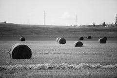Snopy czarno biały fotografia Zdjęcie Royalty Free