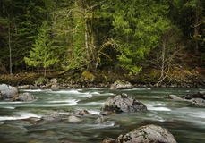 Snoqualamie River. The beautiful Snoqualamie River in western Washington State, flows through a rain forest environment with fir and cedar trees lining the bank Royalty Free Stock Photography