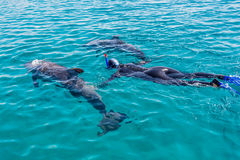 Snorkeilng with dolphins Stock Images