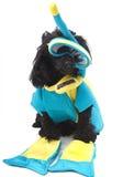snorkel собаки Стоковые Изображения