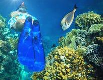 Snorkel Stock Images