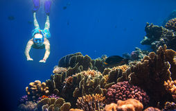 snorkel Arkivfoto