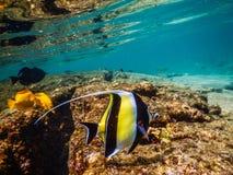 Snorkel Stock Foto