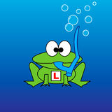 Snorkel Frog. This design depicts a green cartoon frog underwater with a snorkel in his mouth and a learner plate on his body (the frog is learning to be Royalty Free Stock Image