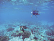 Snorkel with sea turtle. Woman swims undersea in swimming costume and full-face mask. Underwater photo of female snorkel. Snorkeling in coral reef with marine Royalty Free Stock Photo