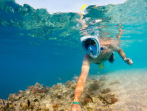 Snorkel swim in shallow water with coral fish, Red Sea, Egypt Royalty Free Stock Photos