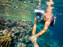Snorkel swim in shallow water with coral fish, Red Sea, Egypt. Snorkel swim in underwater exotic tropics paradise with fish and coral reef, beautiful view of Stock Image