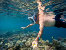 Snorkel swim in shallow water with coral fish, Red Sea, Egypt. Snorkel swim in underwater exotic tropics paradise with fish and coral reef, beautiful view of Stock Images