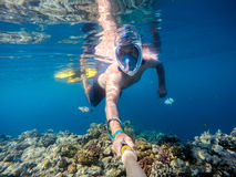 Snorkel swim in shallow water with coral fish, Red Sea, Egypt Stock Images