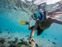 Snorkel swim in shallow water with coral fish, Red Sea, Egypt Royalty Free Stock Image