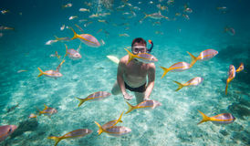 Snorkeler Royalty Free Stock Image