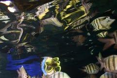 Snorkeler avec des réflexions déformées Images stock